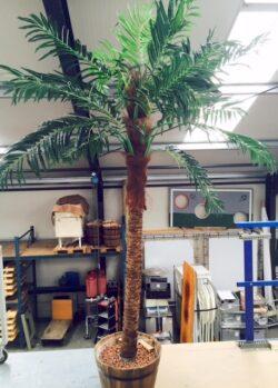 Palmboom huren Alphen aan den Rijn